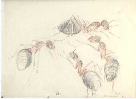 Рисунка композиция с четири мравки, 1936, цветни моливи /хартия, 22,7×29,5