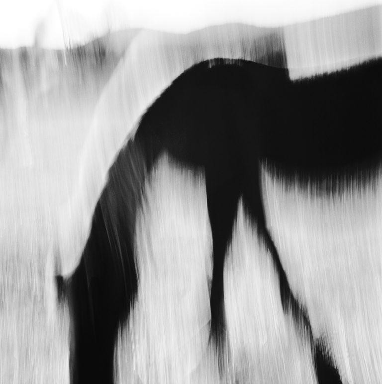 """Hasufel"", 2012, 50×50, Limited edition 2/10"
