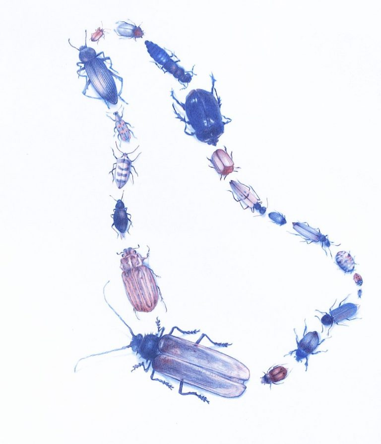 Beetles Mimic Necklace, 2020, Blue and red pencils on mylar, 30.5 x 20.3 cm