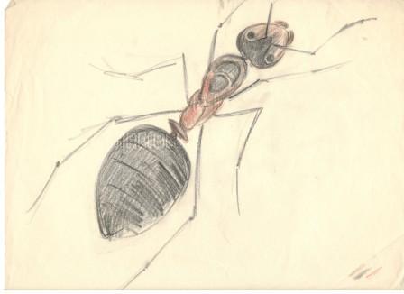 Рисунка на мравка, 1936, цветни моливи/хартия, 23,1×29,5