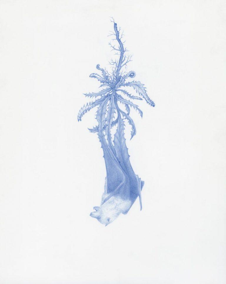 Grotesque No. 5, 2017, син молив върху майлър, 25,4 × 20,3 см