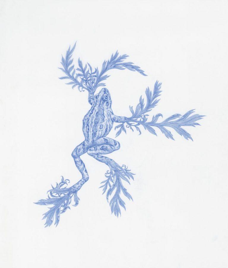 Frog Weed от Specimen Series, 2019, син молив върху майлър, 25,4 х 20,3 см