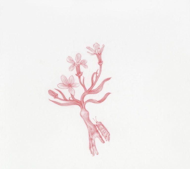 Limb No. 1 от Enigmas, 2020, червен молив върху майлър, 10,2 × 10,2 см