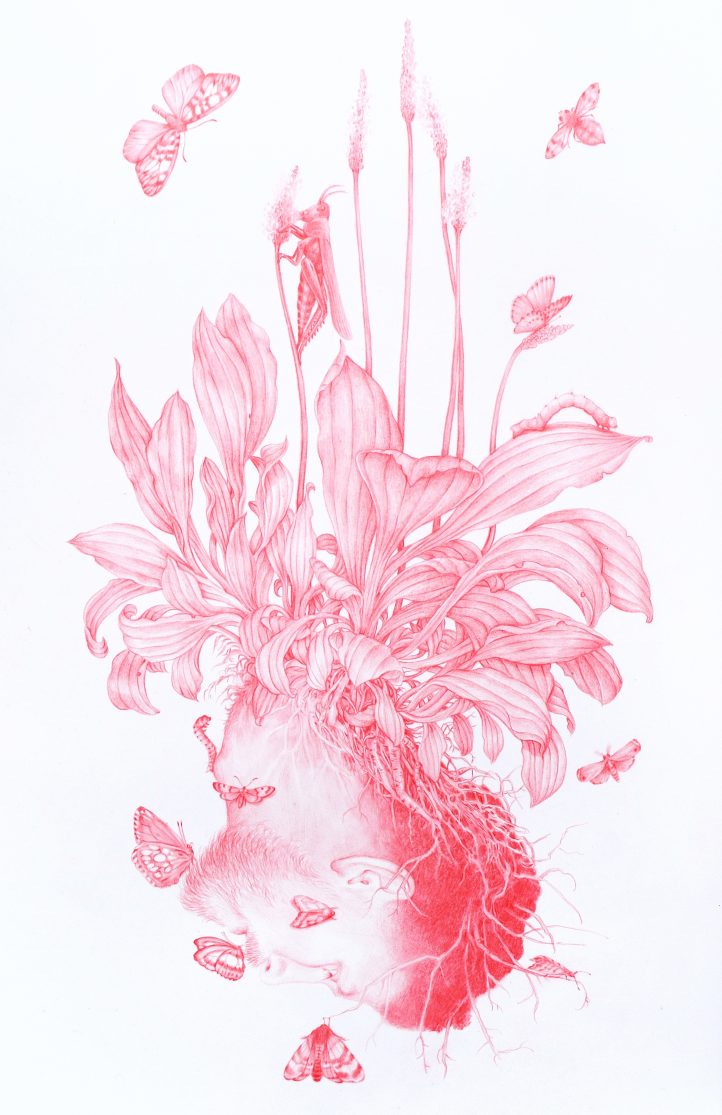 Plantain, from Vanitas Series, 2020, Red pencil on mylar, 30 x 15 cm