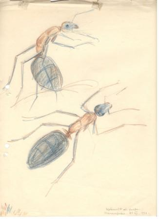 Drawing – composition with two ants, 1936, coloured pencils/paper, 29,8×23,2