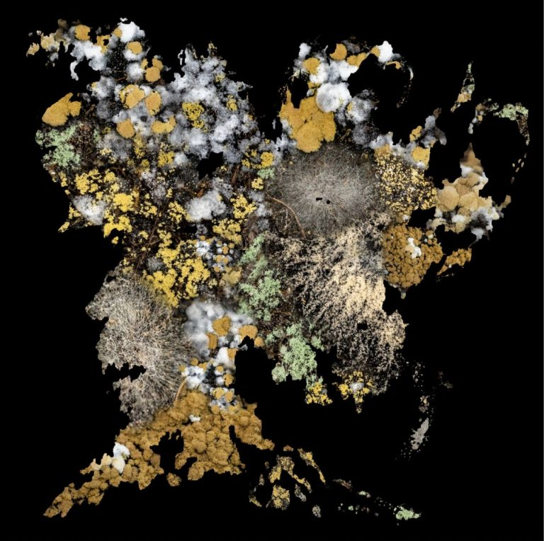 MICROBIAL MAP OF MIDDLE EARTH, 2019, photography, pigment print on paper, edition of 5, 40 x 40 cm.