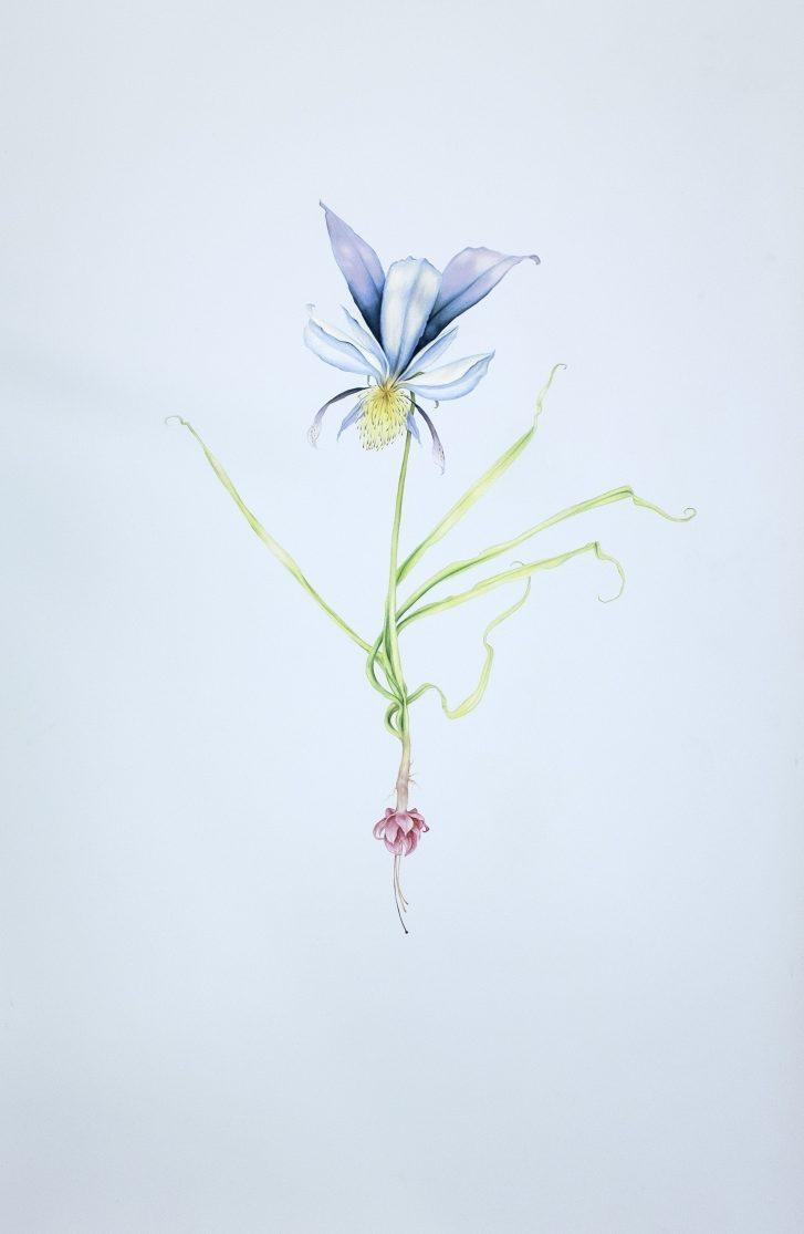 Fantasy Flower Series, Composition in Blue, 2021, pastel on paper, 122 х 78 сm